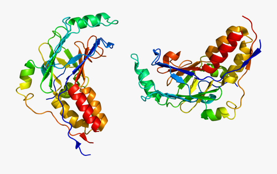 Smad Protein Structure, Transparent Clipart