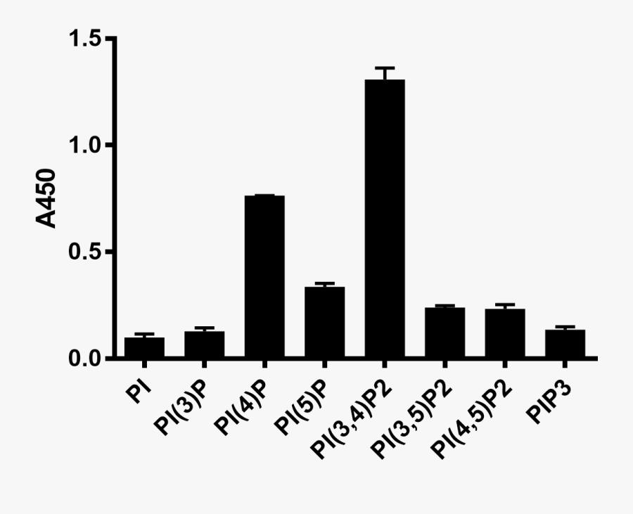 Z-p034, Pip2 Antibody - Designer Babies Graph, Transparent Clipart