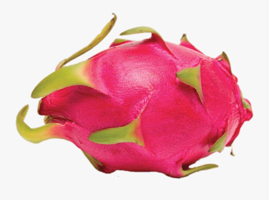 Whole Dragon Fruit - Dragon Fruit, Transparent Clipart