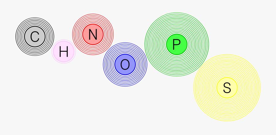 Chnops - Elements Of Living Organisms, Transparent Clipart