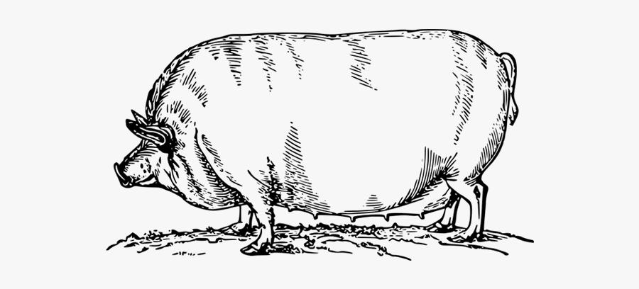 Pork Drawing Chicken Meat - Hog Transparent Black And White, Transparent Clipart