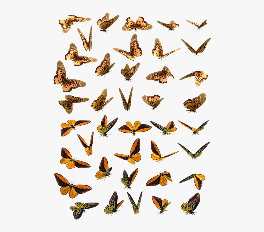 Butterfly, Butterflies, Insect, Swarm, Orange, Brown - Butterfly Swarm Png, Transparent Clipart