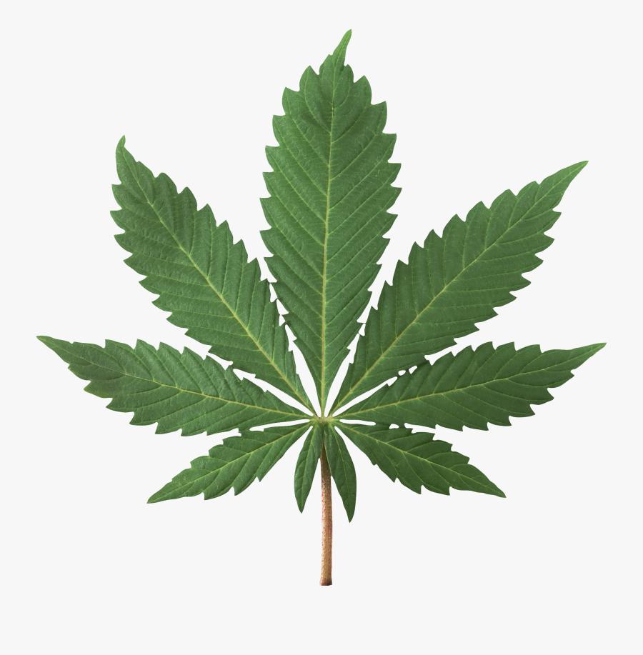 Best Free Cannabis Icon Clipart - High Res Pot Leaf, Transparent Clipart