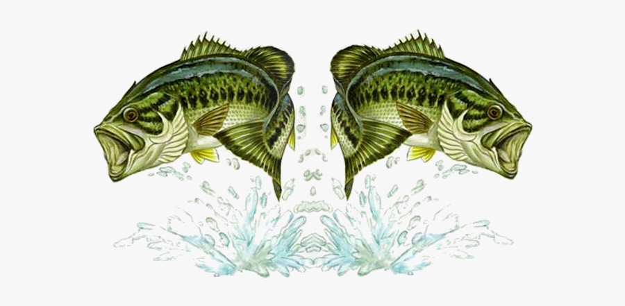 Bass Drawing Jumping - Large Mouth Bass Fish Clipart, Transparent Clipart