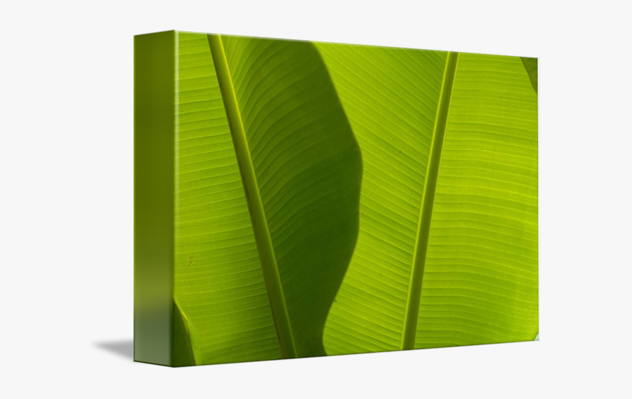 Clip Art Banana Leaves Detail By - Ensete, Transparent Clipart