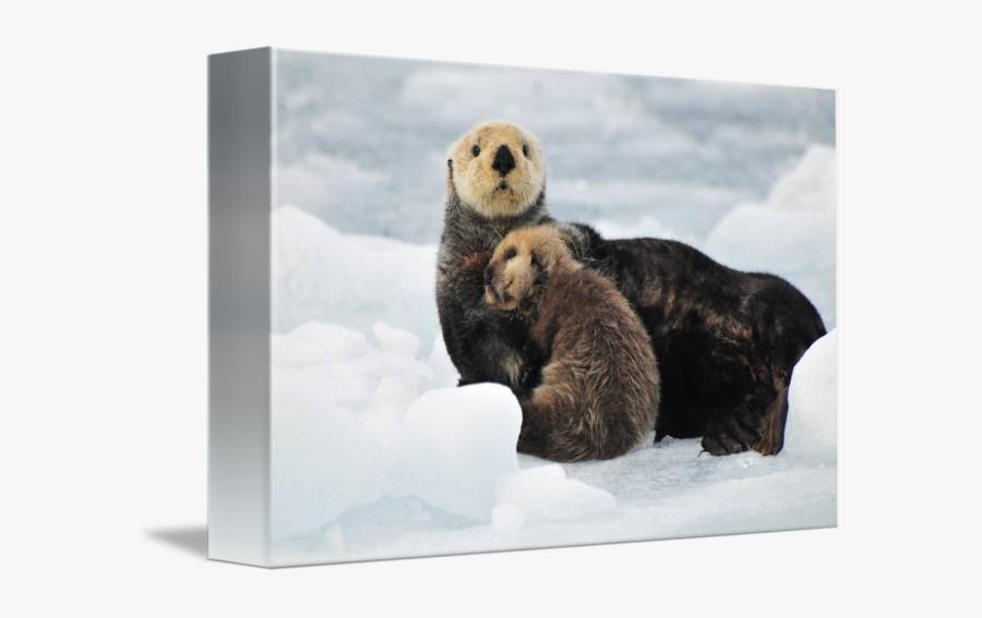 Clip Art Sea Otter Picture - Sea Otters Hugging, Transparent Clipart