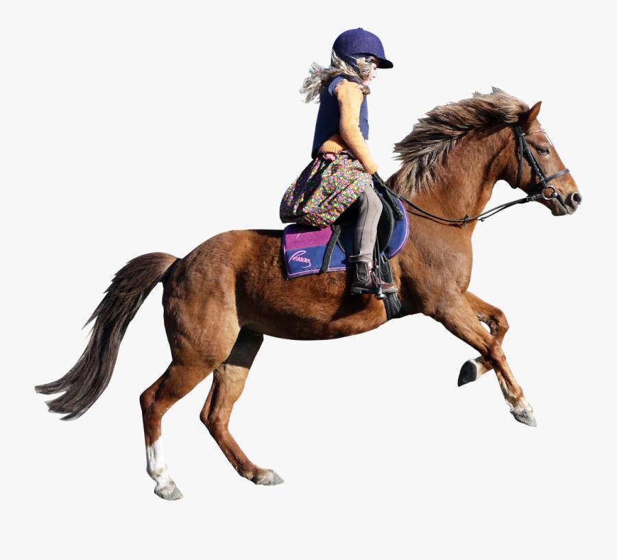 Transparent Horse Png, Transparent Clipart