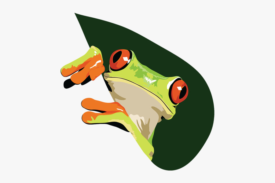 Coqui Drawing Rainforest Frog - Red-eyed Tree Frog, Transparent Clipart