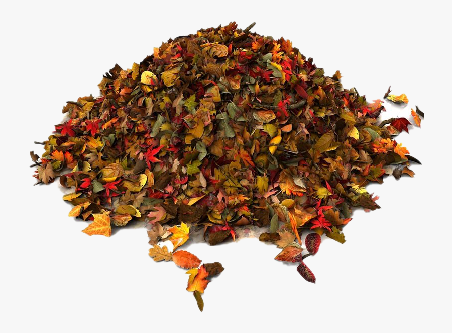 Pile Of Autumn Leaves Png File - Pile Of Leaves Png, Transparent Clipart