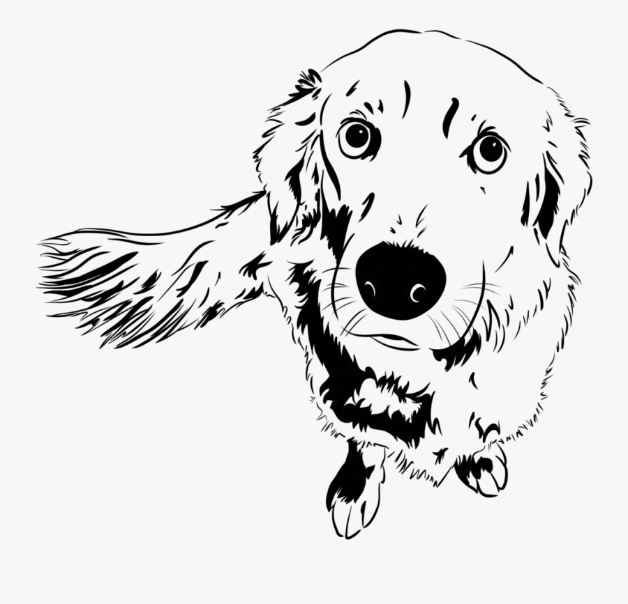 Golden Retriever Sketch - Dog Catches Something, Transparent Clipart
