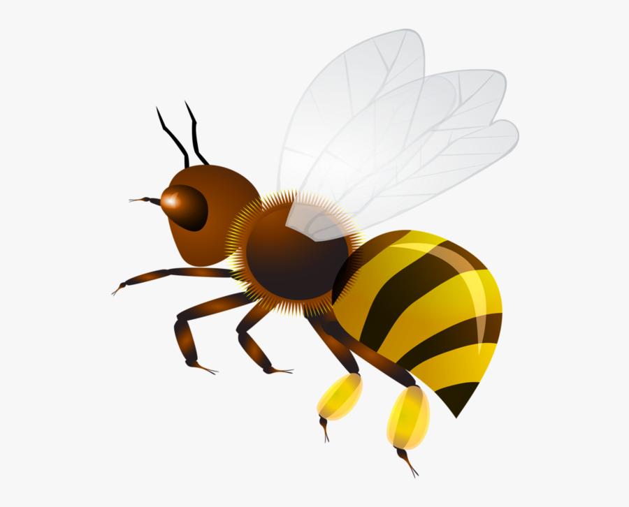 Wasp Vector Bee Stinger - Оса Клипарт, Transparent Clipart