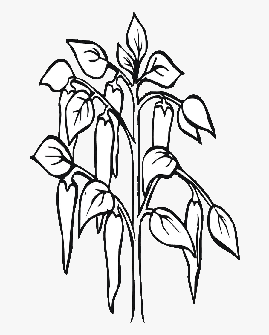 Free Planting Coloring Pages, Download Free Clip Art, Free Clip Art on  Clipart Library