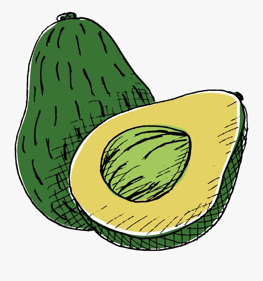 Transparent Avocado Clipart Png - Avocado Drawing, Transparent Clipart