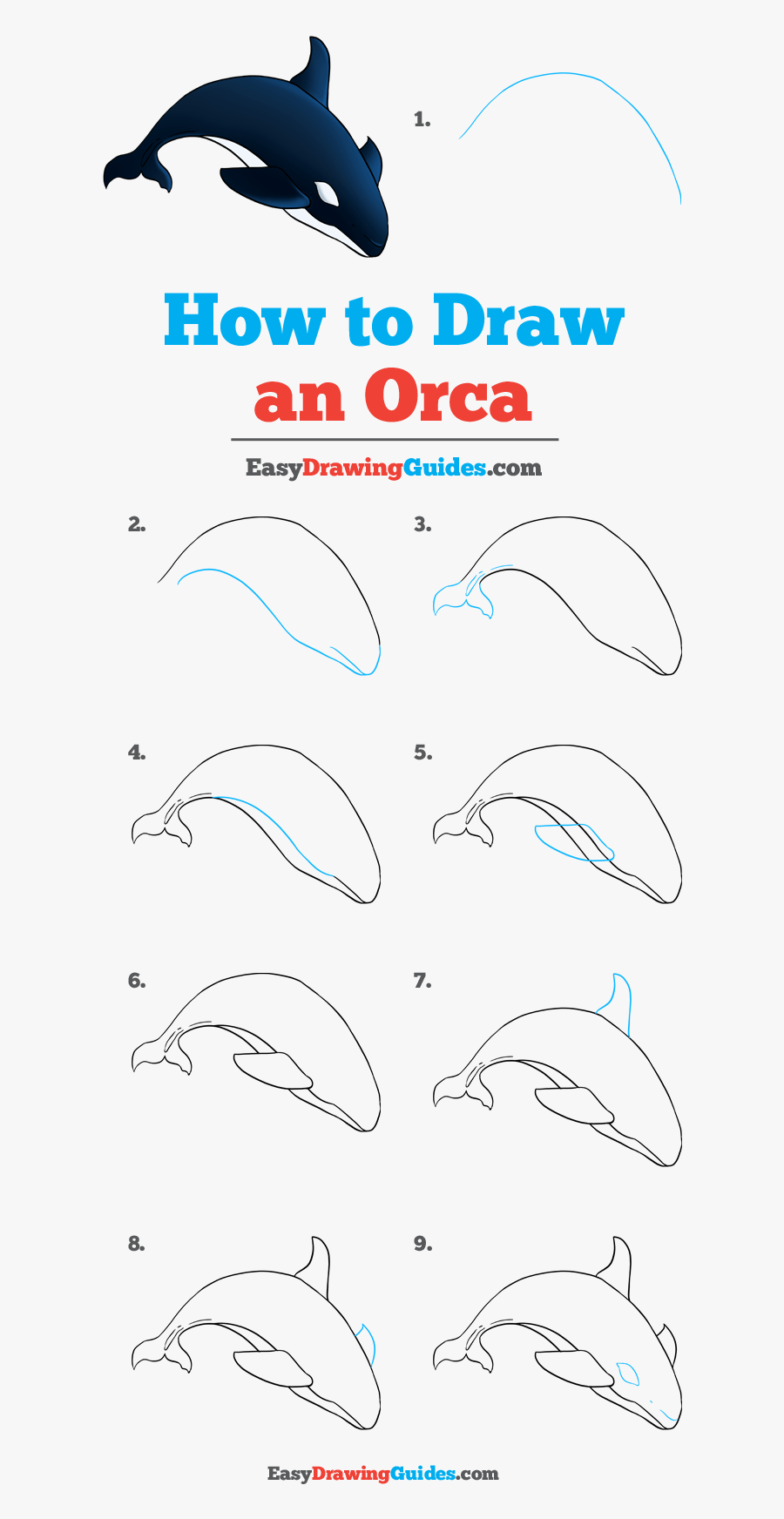 How To An Orcas - Drawing, Transparent Clipart