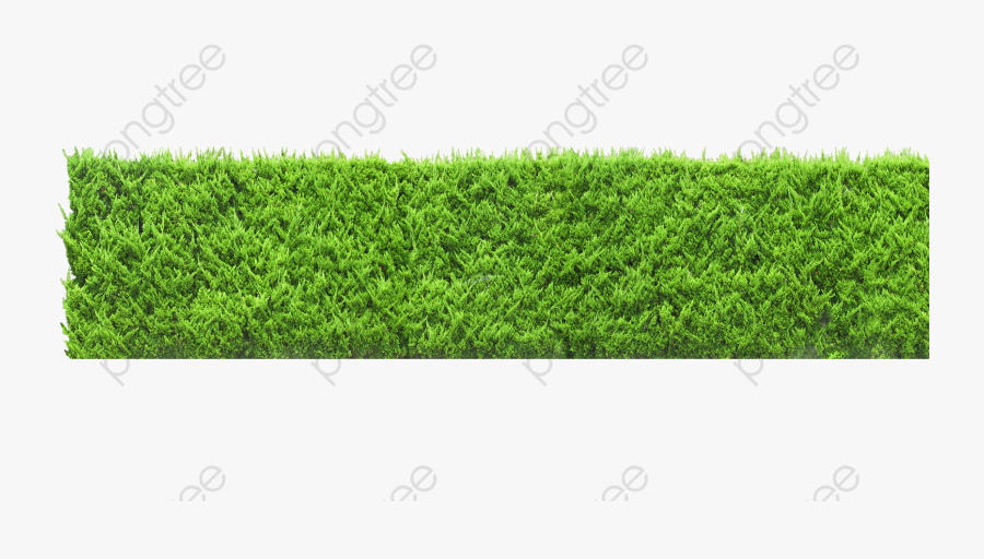 Plants Wall, Plants Clipart, Green, Wall Png Transparent - Green Wall Png, Transparent Clipart