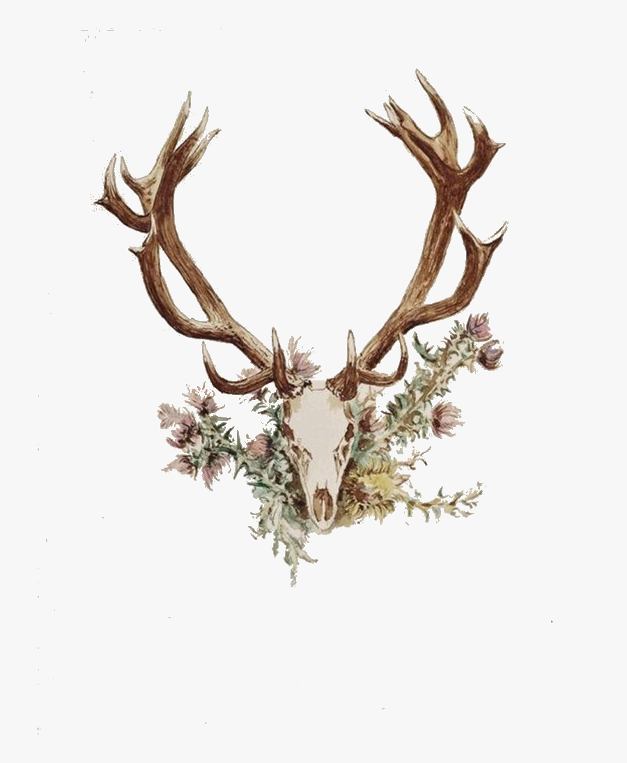 Transparent Deer Skull Clipart - Deer Antlers And Flowers, Transparent Clipart