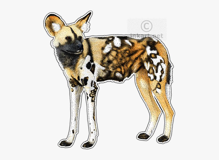 Transparent African Wild Dog Png, Transparent Clipart