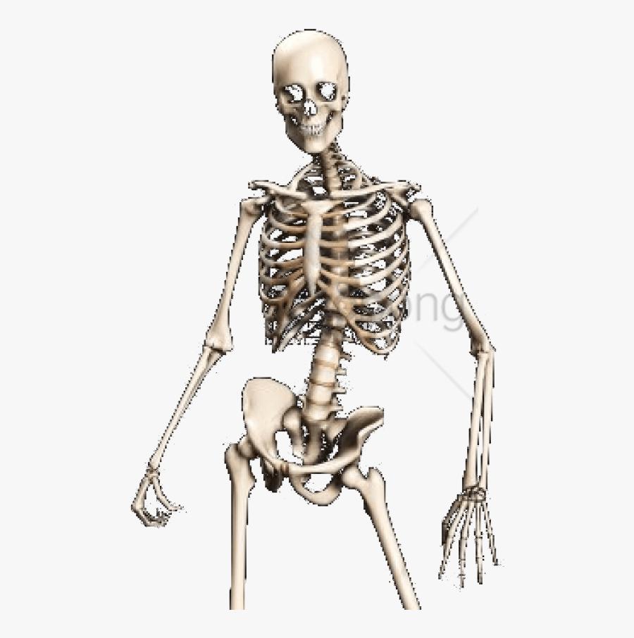 Skeleton,shoulder,human - Transparent Skeleton Png, Transparent Clipart
