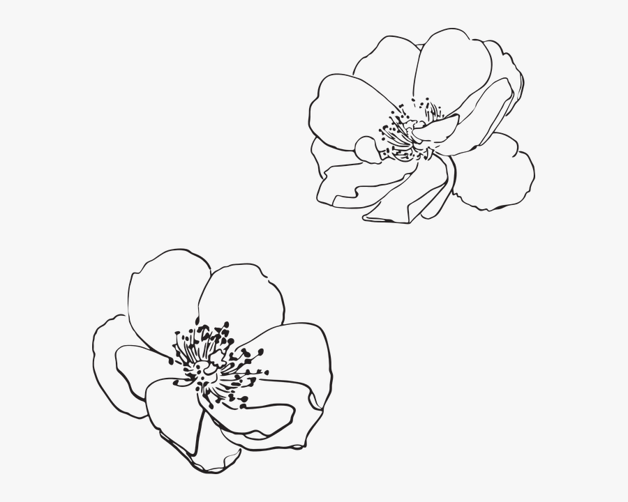 Rose, Wild, Flower, Flowers, Pictured, Vector, Spring - Apple Blossom Line Drawing, Transparent Clipart