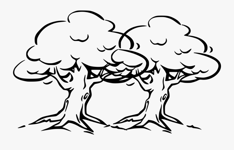 Easy Oak Tree Drawing, Transparent Clipart