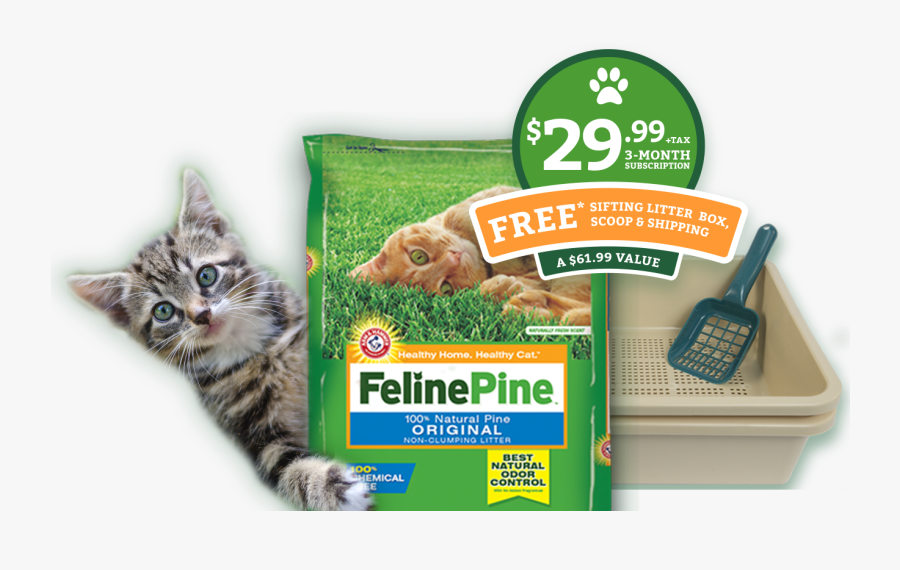 Feline Pine Original Litter, Transparent Clipart