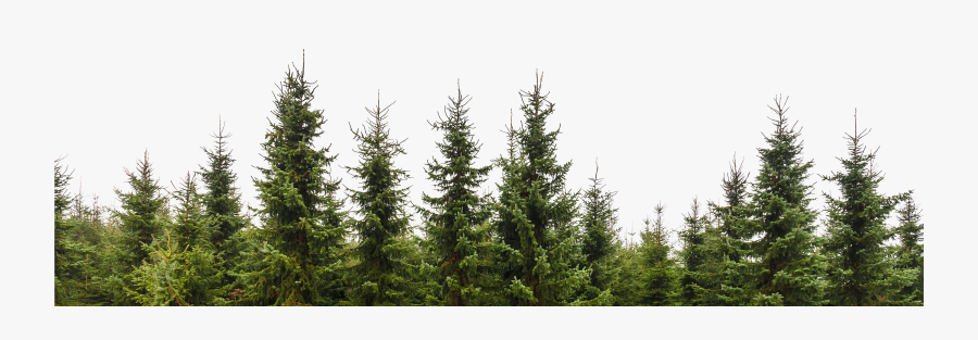 Transparent Trees Png - Pine Tree Forest Png, Transparent Clipart