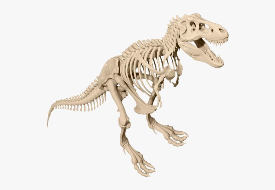 Transparent Tyrannosaurus Rex Png - T Rex Skeleton Png, Transparent Clipart