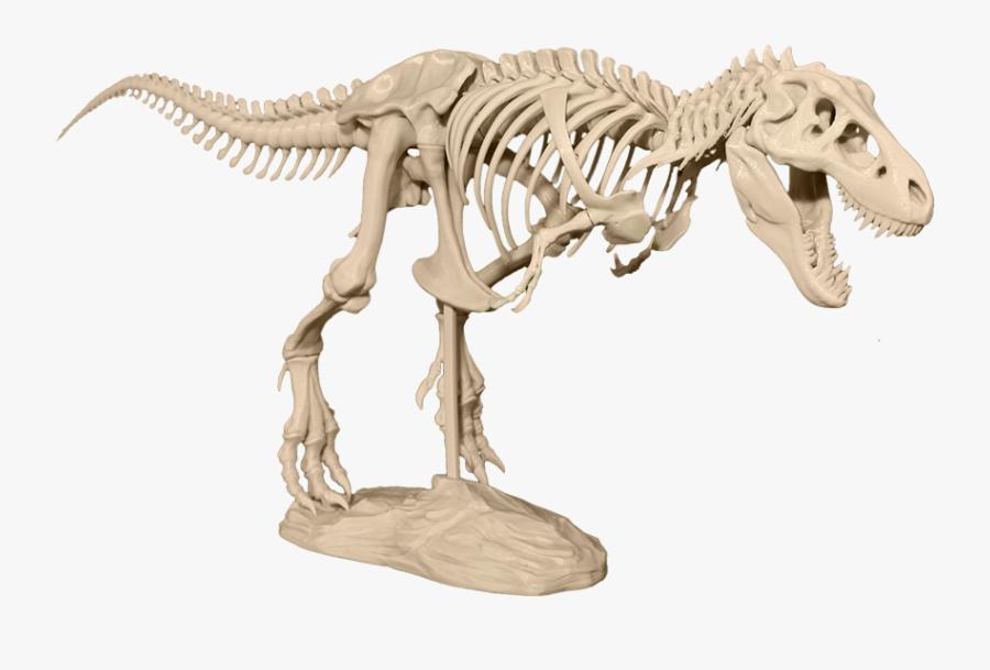 Transparent T Rex Skeleton Png - T Rex Skeleton 3d Model, Transparent Clipart
