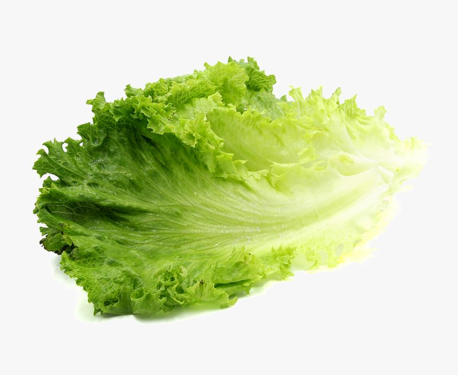 Clip Art Lettuce Png - Lettuce Transparent Background, Transparent Clipart
