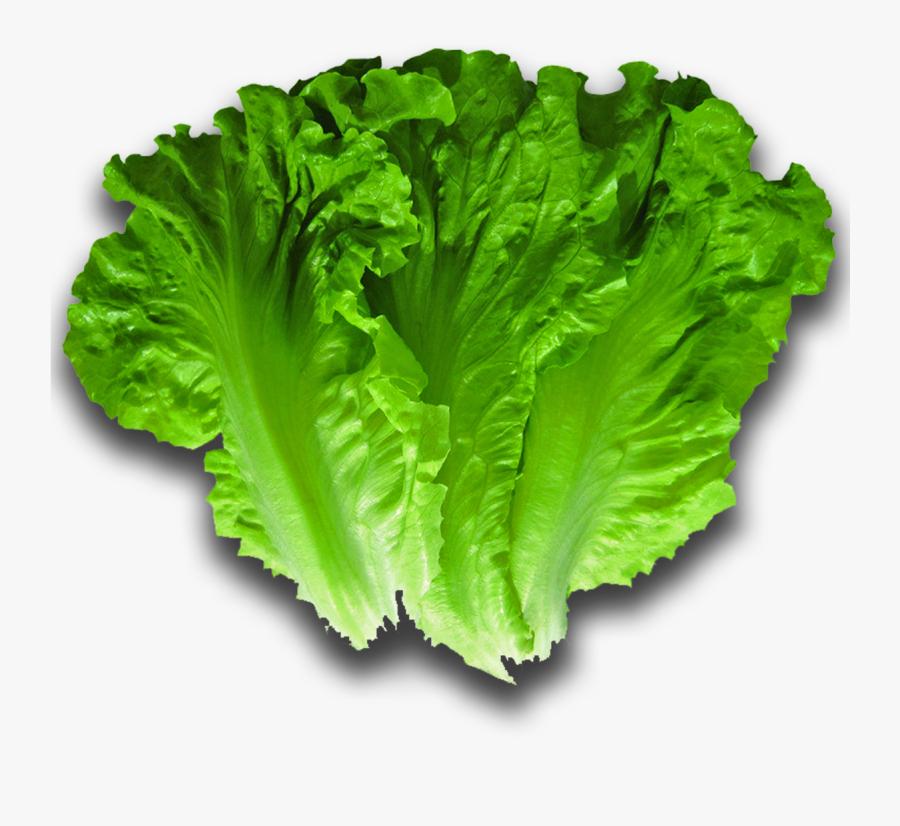 Iceburg Lettuce - Lettuce Png, Transparent Clipart