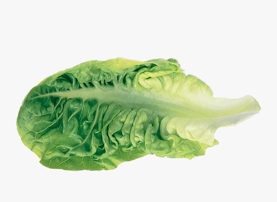 Romaine Lettuce Leaf Vegetable - Transparent Lettuce Leaf, Transparent Clipart