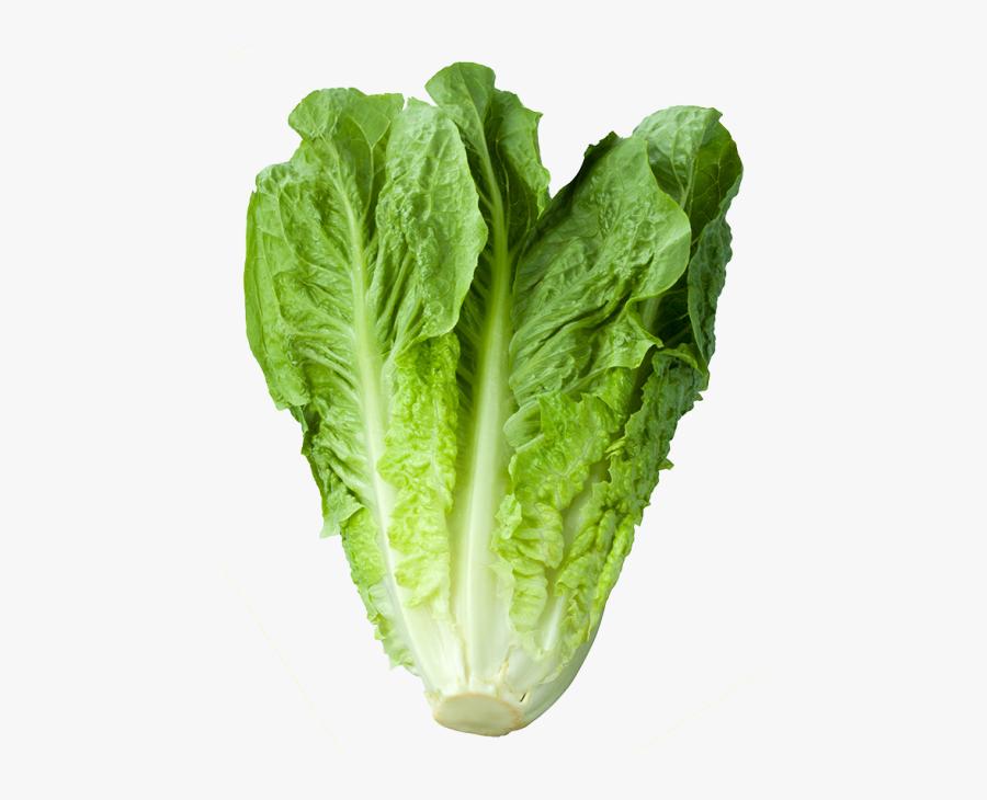 Romaine Lettuce - Vitamin Of Green Vegetable, Transparent Clipart