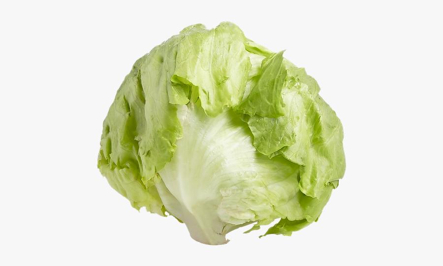 Romaine Lettuce Iceberg Lettuce Endive Leaf Vegetable - Iceberg Lettuce Transparent Background, Transparent Clipart