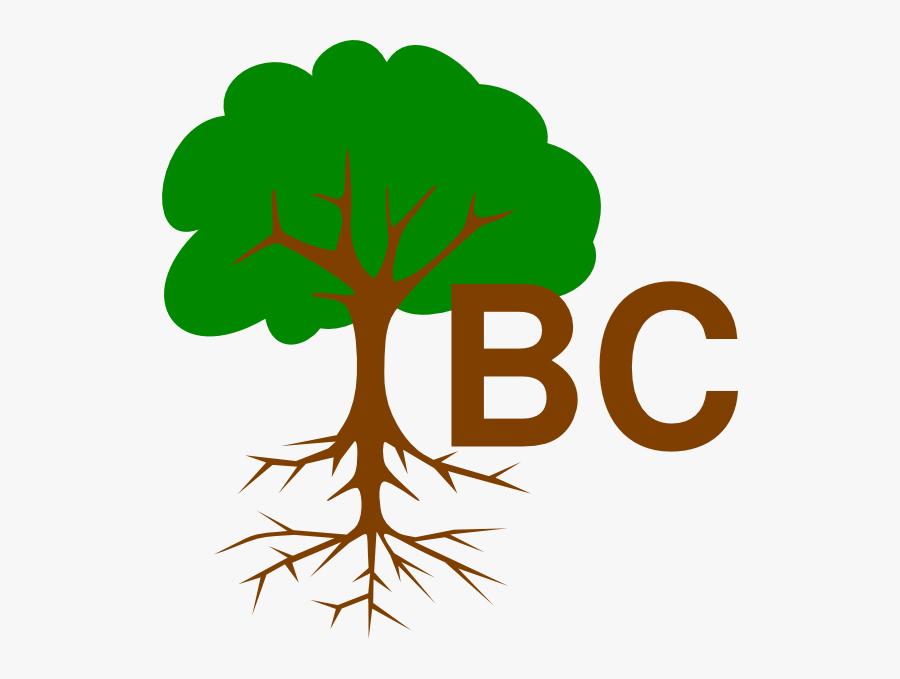 Name Of Tree Part, Transparent Clipart