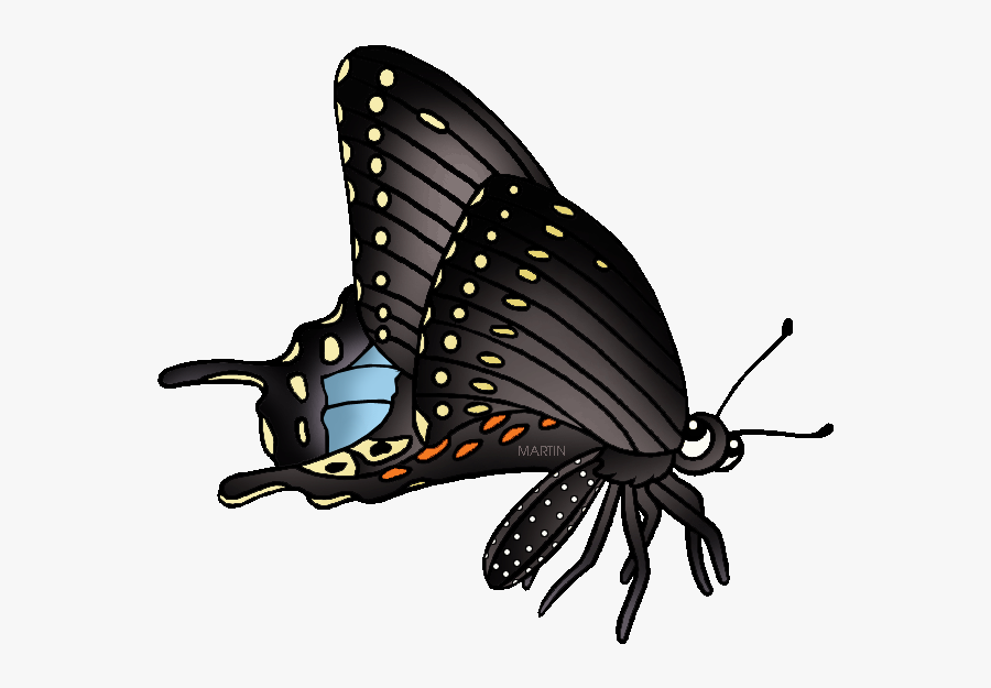 State Butterfly Of Oklahoma - Black Swallowtail Butterfly Clipart, Transparent Clipart
