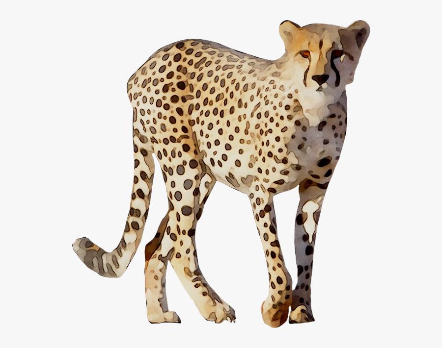 Cheetah Leopard Lion Animal Drawing - Cheetah Animal Images Png, Transparent Clipart