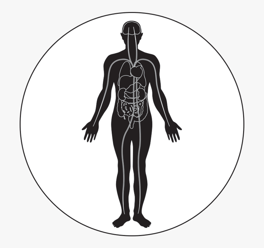 Transparent Muscle Icon Png - Organs And Tissues That Can Be Transplanted, Transparent Clipart