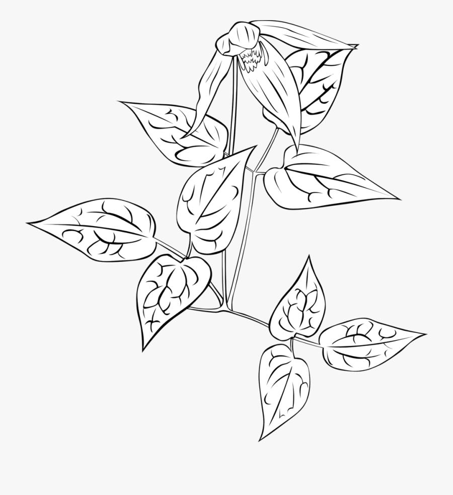 Money Plant Coloring Page, Transparent Clipart