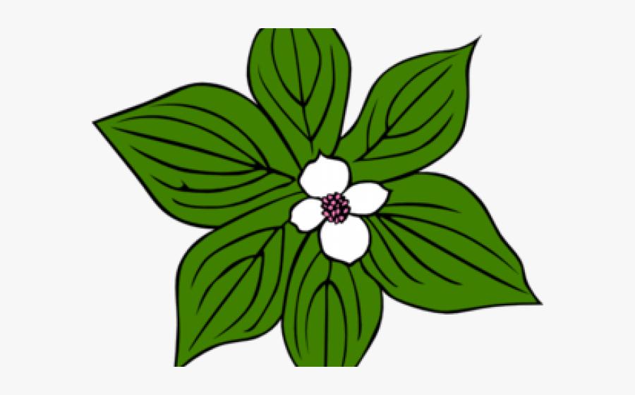 White Flower Clipart Green - Tropical Rainforest Plants Drawings, Transparent Clipart