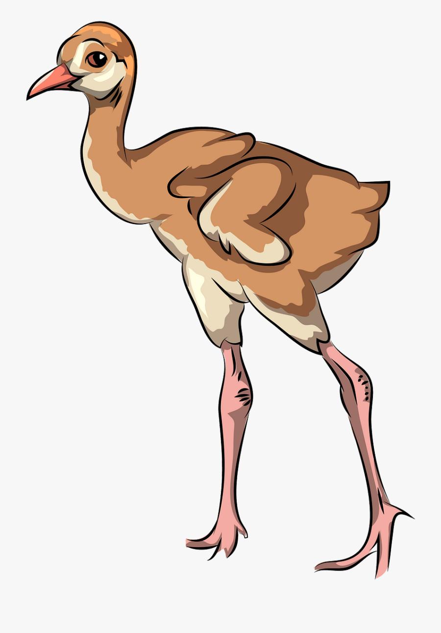 Flightless Bird, Transparent Clipart