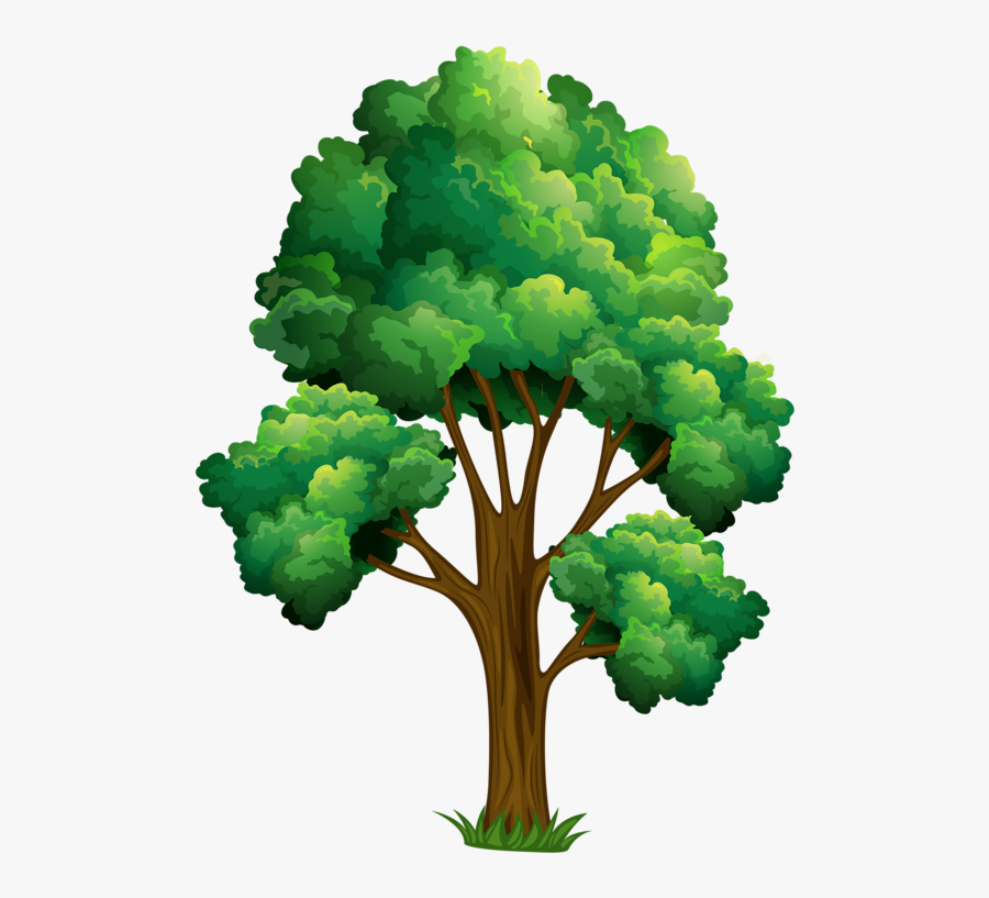 Elm Tree Clipart - Realistic Tree Clip Art , Free Transparent Clipart -  ClipartKey