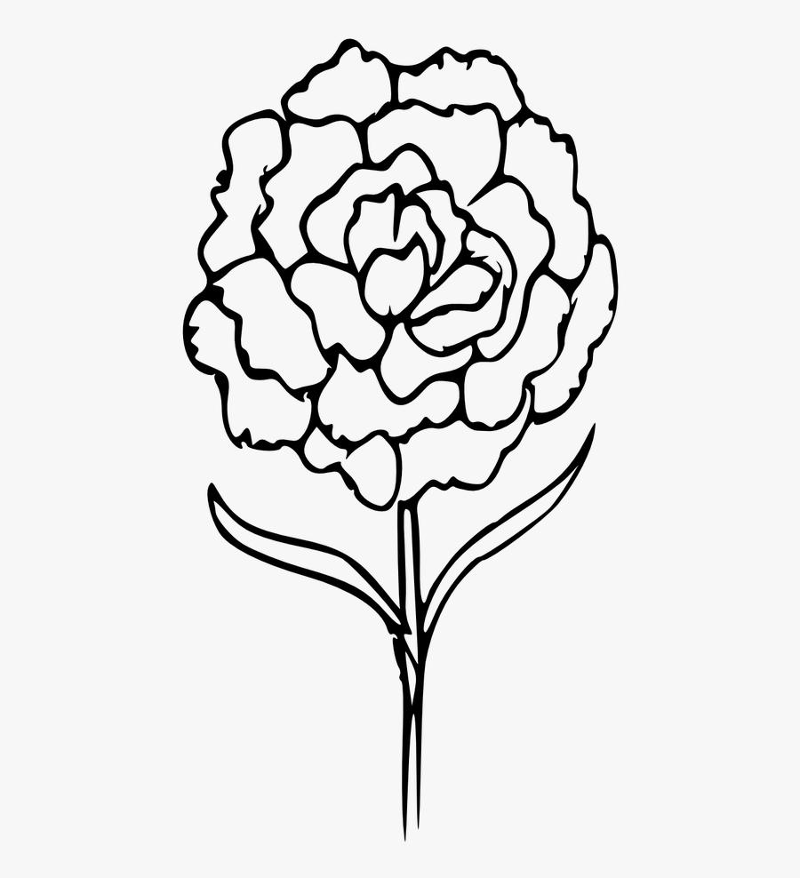Outline Carnation Coloring Flower - Carnation Flower Clipart Drawing, Transparent Clipart