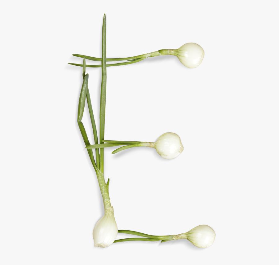 Green Onions Font Letter E - Letter E That Looks Like A Vegetable, Transparent Clipart