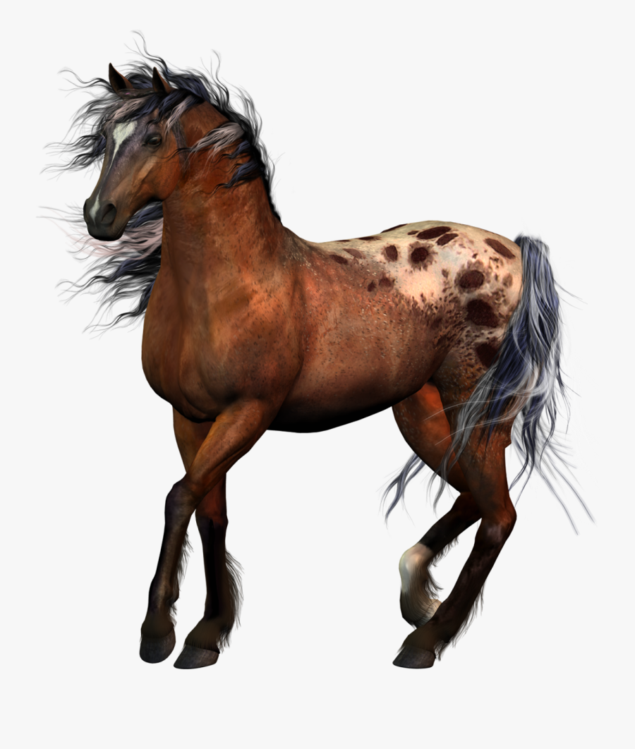 Horse Tack Equestrian Western Riding - Horse Riders No Background, Transparent Clipart