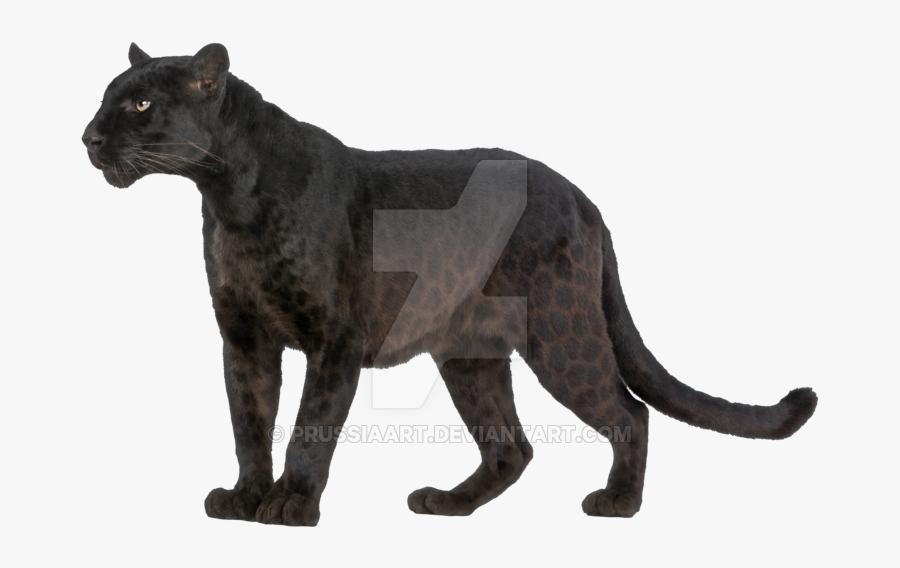 Black Panther Head Png - Safari Animals Figures 2019, Transparent Clipart
