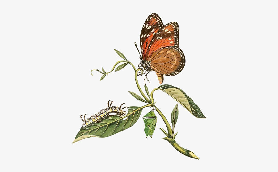 Danaus Eresimus Clip Art - Butterfly On The Leaf Clip Arts, Transparent Clipart