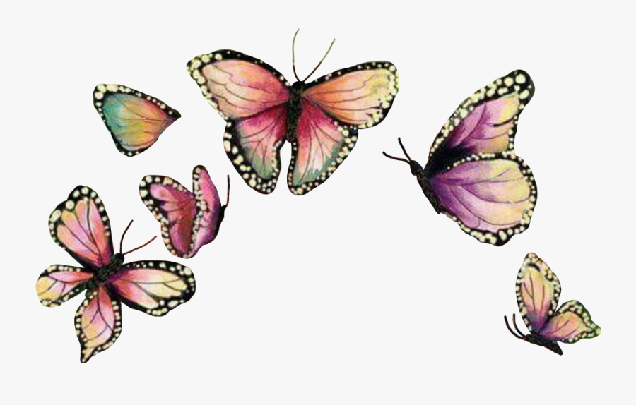Butterflywings Mariposa Sticker Report - Butterfly Crown Png, Transparent Clipart