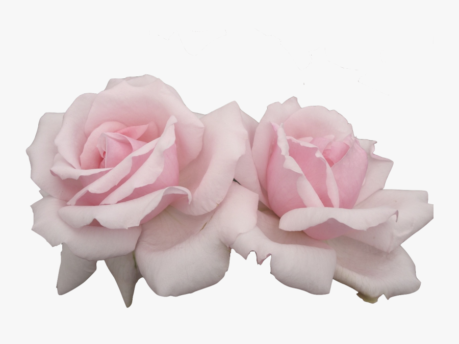 Pink Flowers Pastel Rose - Pink Flowers Png Aesthetic, Transparent Clipart