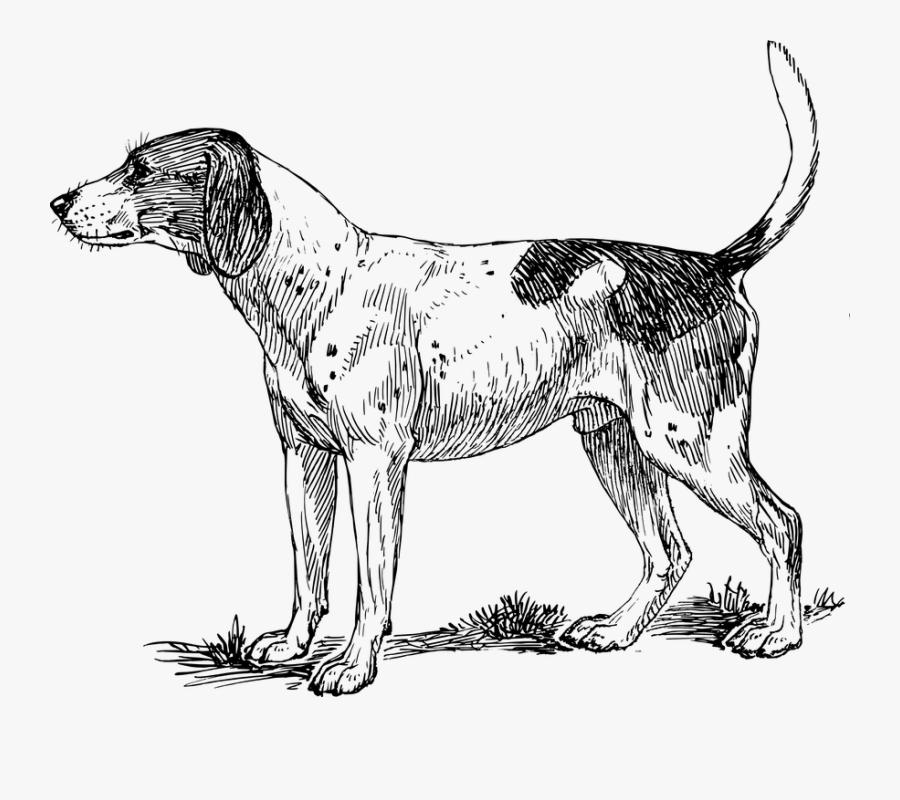 Hound, Animal, Biology, Dog, Mammal, Pet, Zoology - Clipart Hound, Transparent Clipart