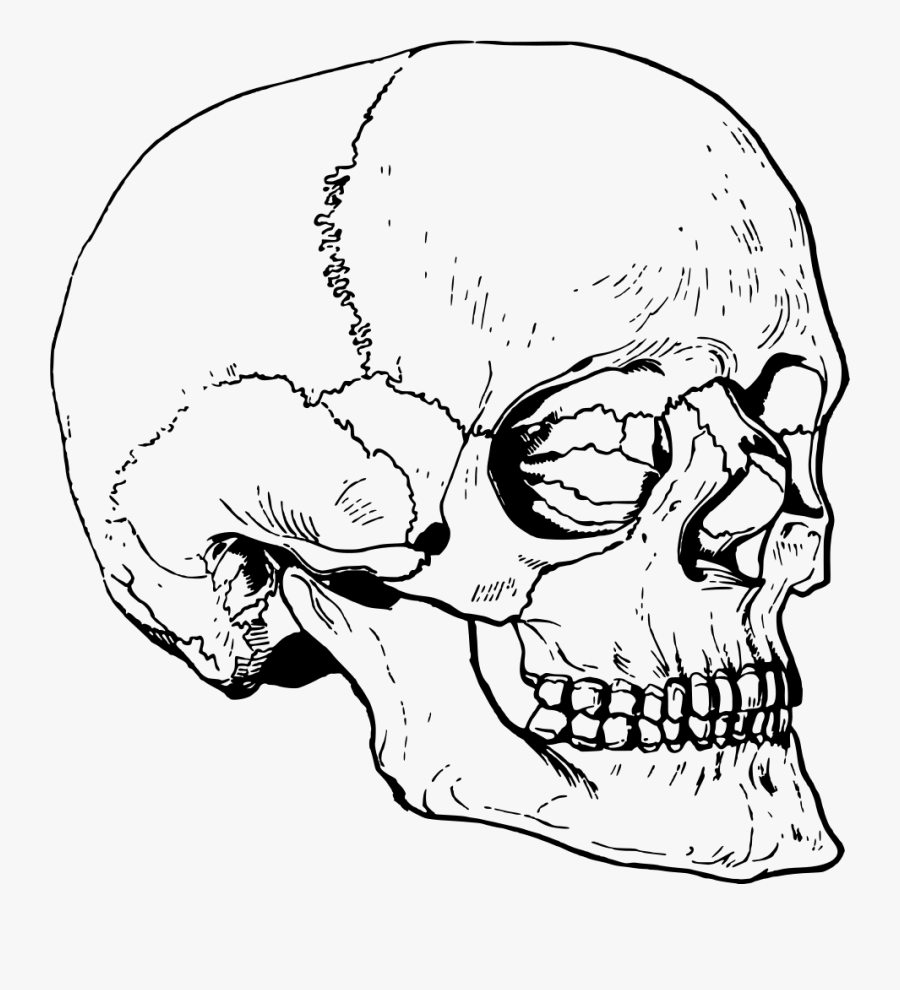 Skull - Big Skull Head Drawing, Transparent Clipart